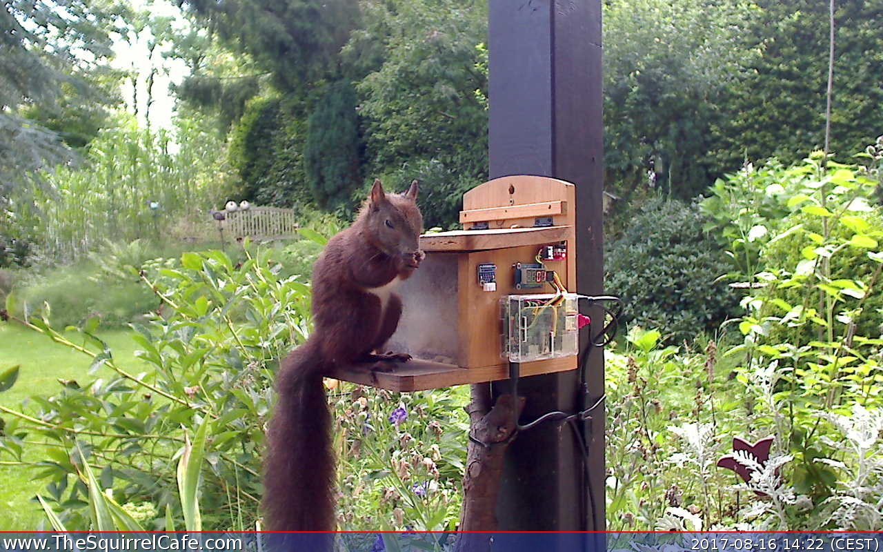 A squirrel enjoying a tasty treat at the Squirrel Cafe