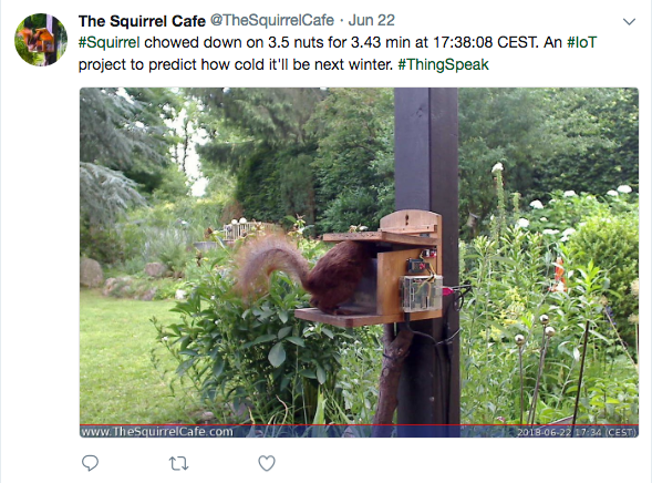Follow along with the cafe's tweets @TheSquirrelCafe