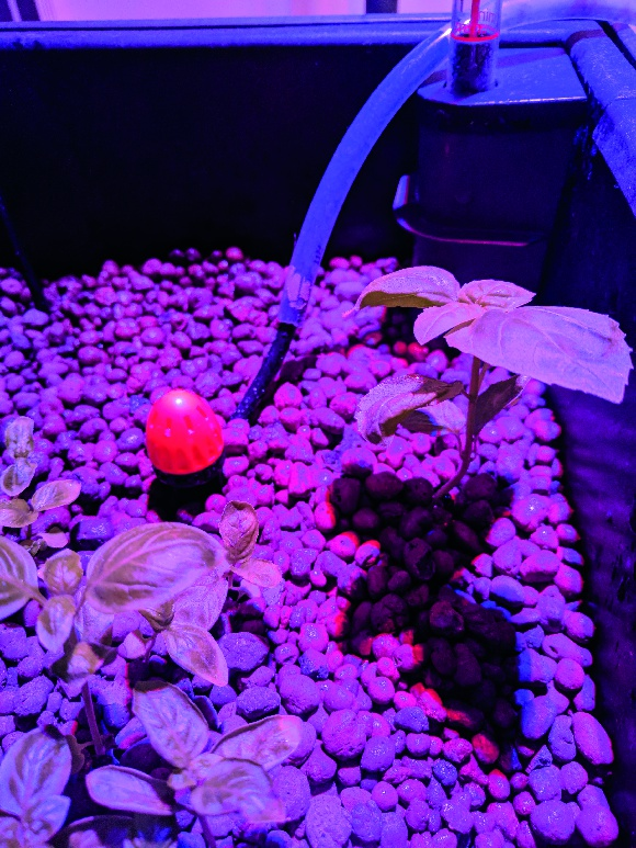 Step 3. Make sure plenty of light is being provided to the seeds. You can get special plant lamps, like Diego has used, which help the seeds grow.