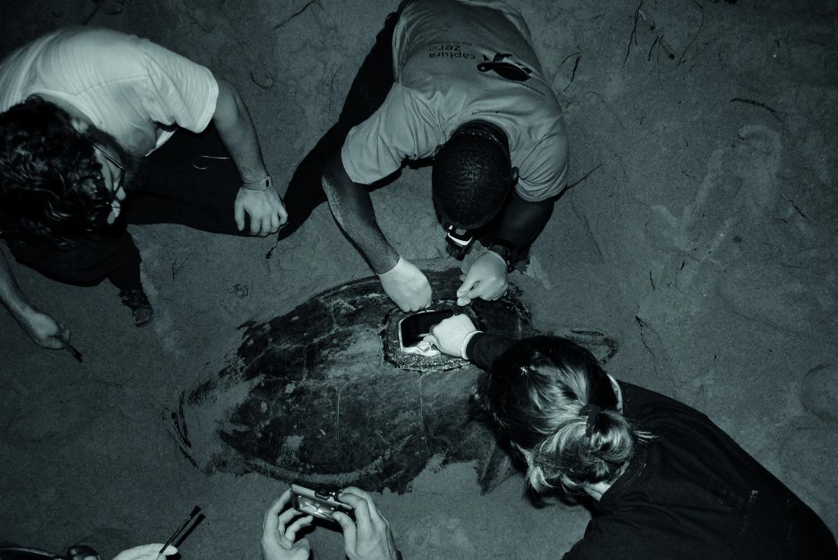 Tagging a green sea turtle with Raspberry Pi Zero W